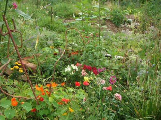 Blumen, Wabengarten, Green City e.V., Foto: Green City e.V.