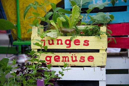 Junges Gemüse, Streetlife Festival, Green City e.V., Foto: Tobias Hase