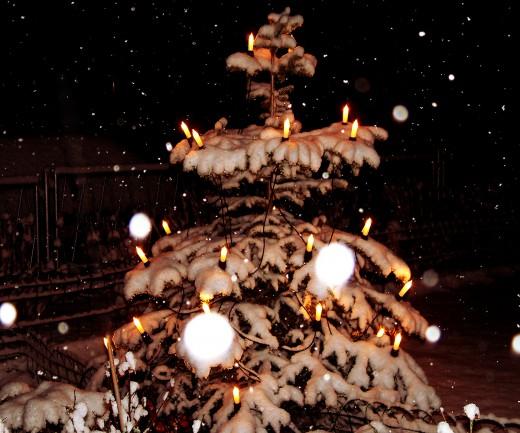Foto ökologische Weihnachtsbäume
