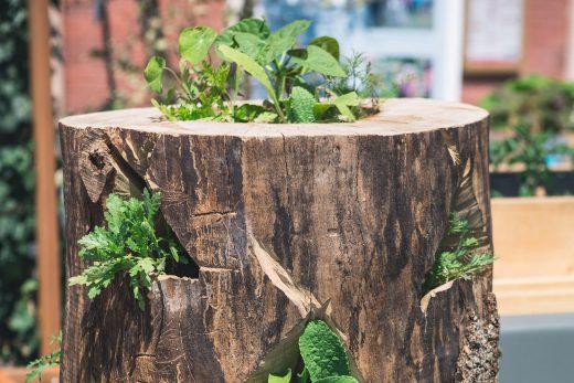20180512_Urban Gardening Pasing_Paul Günther luminar (4)