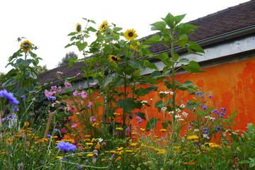 Blühende Bänder für Bienen