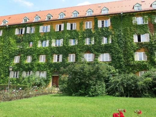 Fassadenbegrünung, Borstei, Foto: Wolfgang Heidenreich