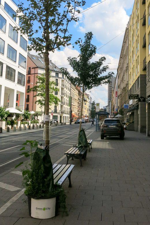 Wanderbäume_Kalrstraße_Kerstin-Schwabenbauer (33) bearbeitet-